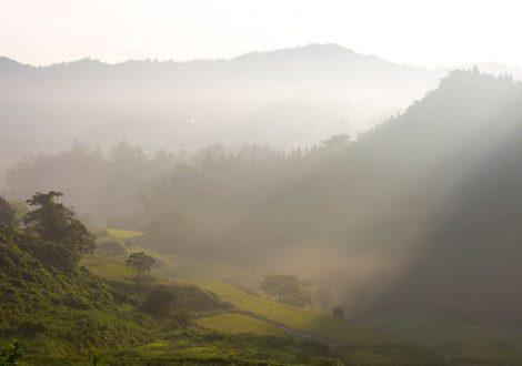 朝靄の棚田